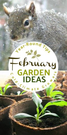 What to make and grow in February for year-round gardeners in a cold climate. #gardentasks #gardening #november #coldclimategardening #empressofdirt