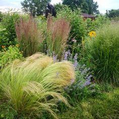 Marchewka z własnej grządki - jak uprawiać marchewkę? - Mój Piękny Ogród - Ogrody ozdobne, Rośliny, Kwiaty Herbs, Plants, Herb, Plant, Planets, Medicinal Plants