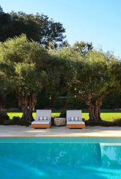 12 SUMMER WORTHY POOLSCAPES   Gnarled Olive Trees Provide The Perfect Frame  For Poolside Lounging. Design By Greenblott Landscaping.