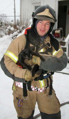 brannvesen katt