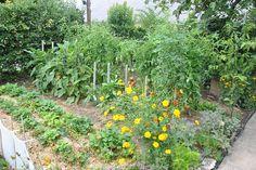 Fleurs, légumes et pieds d'aromatiques poussent côte à côte, (c) Agnès Guillaumin, SNHF. René Guiraud, lauréat du concours Jardiner Autrement 2011.