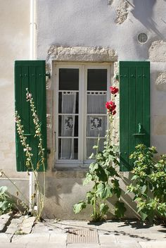 roses trémières by wood & wool stool, via Flickr