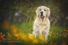 beautiful golden II by DannyBlock via http://ift.tt/1TJoOZO