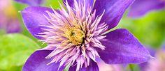 Voor informatie over Snoeien in juli: Ga naar online tuincentrum Bakker.com
