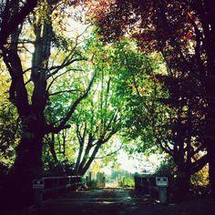 Instagram @gabriellawotherspoon    #nature #trees #sun #autumn #beautiful #sunlight #color #colors #bridge #vscocam