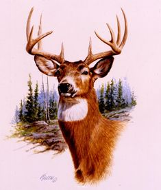 """""""Prize Buck"""" Whitetail DeerOriginal Watercolor in Private Collection -Wildlife Paintings Original Wildlife and Big Game Paintings by Jim Kil..."""