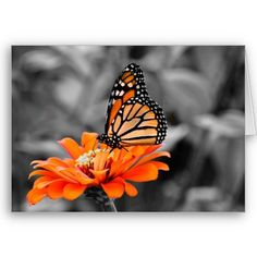 Madam Monarch Butterfly Greeting Card from http://www.zazzle.com/monarch+butterfly+cards