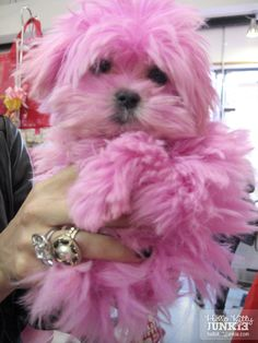 Pink maltese, what could be better? Should I dye my dogs pink for breast cancer awareness? It might scar them for life. Pink Dog, Pink Girl, Pink Animals, Cute Animals, Colorful Animals, Terrier, Pink Power, I Believe In Pink, Baby Dogs