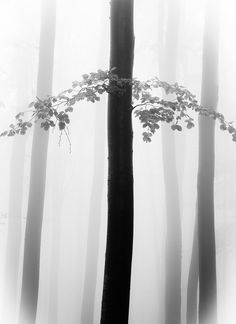 The Arrow by Serban Bogdan on Art Limited Snow Forest, Artwork Images, Art Work, Arrow, Black And White, Artist, Artwork, Work Of Art, Black N White