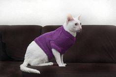 Merino sweather for catClothes for catsSphynx cat sweather