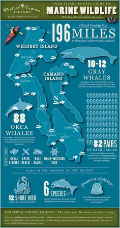 Whidbey & Camano Islands are great places to watch wildlife in Puget Sound. This Marine Wildlife infographic is a great starting point for understanding what is seen in our region