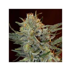 Herbs, Herb
