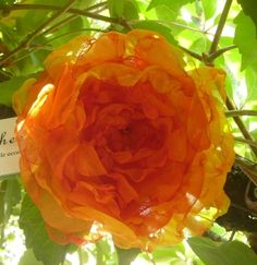 Today inspiration for this flower Chicheek was a flower tacoma, http://www.facebook.com/pages/Chicheek-shabby/146041415534104