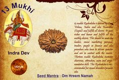 Benefits of Thirteen Mukhi : God: Lord Indra / Planet : Venus  13 mukhi Rudraksha is blessed by Lord Vishnu, Indra and also Kaamdev (Cupid) and fulfills all desires. It gives riches and honor and fulfills all the earthly desires. This should be worn by leaders, senior marketing personal, traders, people in finance and also preachers who have to deliver speeches and are in contact with the masses.  See more http://www.rudralife.com/Rudraksha/details.php?id=19