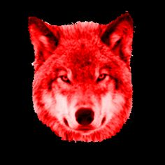 Image result for WOLF - .GIF
