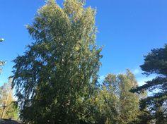 Syystulvassa  Clouds, Plants, Outdoor, Outdoors, Plant, Outdoor Games, The Great Outdoors, Planets, Cloud