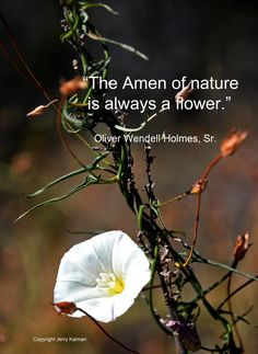 #quotograph on #oliverwendellholmessr birthday and flower at #santamargaritaecologicalreserve in #fallbrook