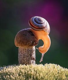 Snail by Vyacheslav Mishchenko - Вячеслав Мищенко