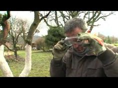 Jardiner : L'entretien de arbres fruitiers