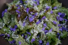 edible flowers. after having wildflowers in a kale salad at work, i am obsessed with the idea...