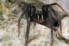 How To Keep Spiders Out Of Your Home! - Home inspo & DIY blog. By you. #renovate