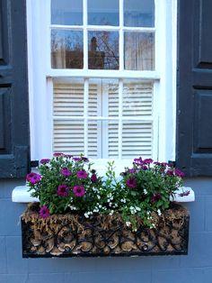 Wrought iron window box, Charleston, SC.