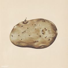 Potato Drawing, Vegetable Drawing, Vegetable Pictures, Veggie Art, Hand Images, Free Images, Object Drawing, Pictures To Draw, Drawing Pictures