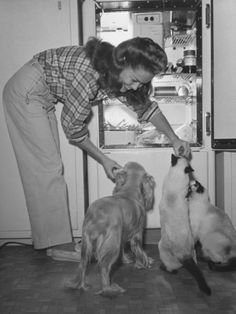 Donna Drake feeding her cats a treat