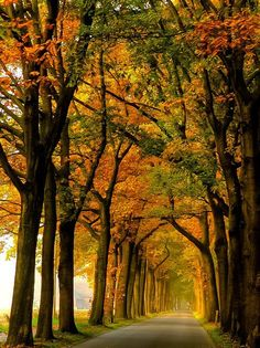 Landkreis Borken, North Rhine-Westphalia, Germany    Image Credit : Julia elmira