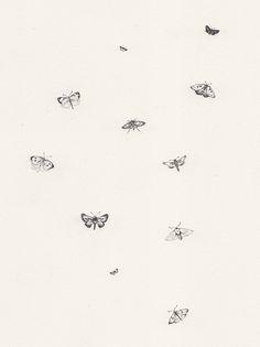 Sarah Mcneil Tiny Moth Illustration
