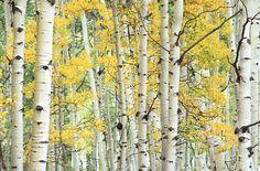 Buy Original Art by Abhi Ganju | photography | Glorious Colorado ...