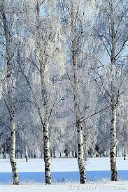 Resultado de imagem para paisagens da russia neve