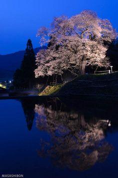 Yougai Zakura, Tojo, Shoubara city, Hiroshima, Japan
