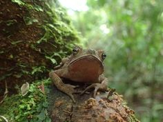 Can you tell if this is a frog or toad?  #gvi #nature #volunteer