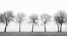 Like soldiers standing in attention, gazing at the horizon, a stylish black-and-white photo wallpaper opens up the room - Tree soldiers | R12981 | Wall murals - Wallpaper | Rebel Walls