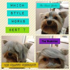 Yorkie hairstyles #yorkies #yorkielove #yorkshire terriers