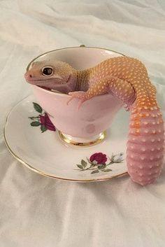 Le plus à jour Images Reptiles gecko Populaire Les Reptiles, Cute Reptiles, Reptiles And Amphibians, Cute Lizard, Cute Gecko, Leopard Gecko Cute, Baby Leopard, Cute Creatures, Beautiful Creatures