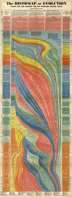 The Histomap of Evolution. Here is one you can zoom in on: http://www.tehowners.com/info/History/Histomap.jpg