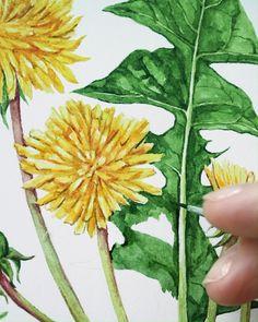 Watercolor Painting Techniques, Watercolor Sunflower, Watercolour Tutorials, Watercolour Painting, Watercolor Flowers, Botanical Flowers, Botanical Art, Botanical Illustration, Watercolor Illustration