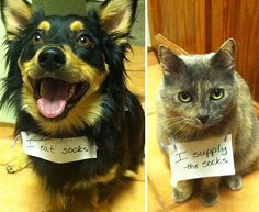 Dog shaming / cat shaming Love that expression on the cat's face! Cat Shaming, Public Shaming, Animals And Pets, Funny Animals, Cute Animals, Funniest Animals, Animal Fun, Funny Dogs, Cute Dogs