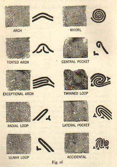types of fingerprints