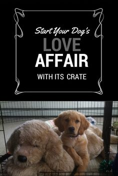 Many poeple think it's cruel to put their puppies in crates. Our dogs love their crates!  Start by putting wonderful things in your pup's crate, such as meals, chewies (pigs' ears, bully straps or bully sticks), or frozen Kongs stuffed with peanut butter.  Be sure to put the treat into the crate without your puppy seeing you do it. It won't take long before she goes in on her own as soon as you open the door! See the great treats for crate training on our site! #AvidogPuppyTips…