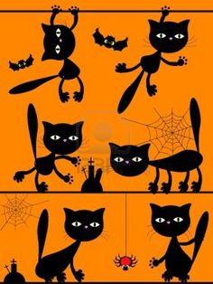 Black cats spiderwebs and cats