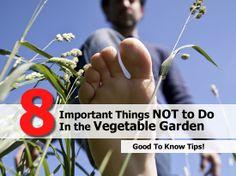 vegetable-garden-not-to-do