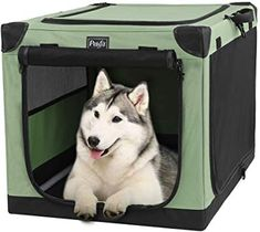 Petsfit Portable Soft Collapsible Dog Crate for Indoor and Outdoor Use Portable Dog Crate, Collapsible Dog Crate, Portable Dog Kennels, Medium Dog Crate, Medium Dogs, Dog Kennel Cover, Diy Dog Kennel, Dog Safety, Old Dogs