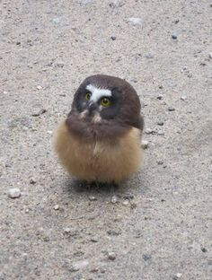 Wanna see a baby owl be really adorable for 28 seconds?
