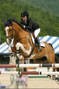"""""""Man, it feels great to have 17 hands between your legs!"""" 