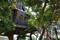 【神奈川・横浜】ドラマ「シェアハウスの恋人」に登場したツリーハウス「なんじゃもんじゃカフェ」でベーグルを食べてきた