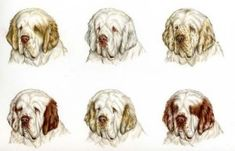 """Excellent """"cocker spaniel"""" detail is offered on our web pages. Read more and you wont be sorry you did. Clumber Spaniel, Spaniel Puppies, Cocker Spaniel, Spaniels, Big Dogs, Dogs And Puppies, English Springer Spaniel, Dog Owners, Dog Breeds"""