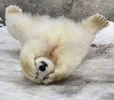 """Spirit bear cub - """"Ewwww, mom and dad are getting mushy again!"""""""